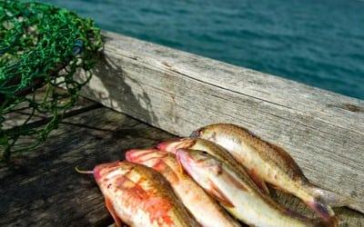 Moonta Bay Seafood